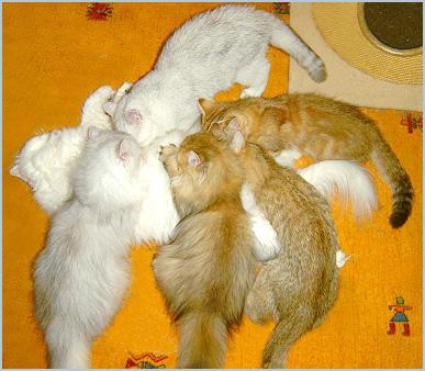 14 Wochen alte Kitten