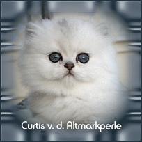 Curtis1.jpg
