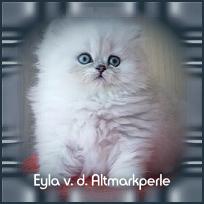 Eyla1.jpg