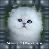 Niclas1.jpg