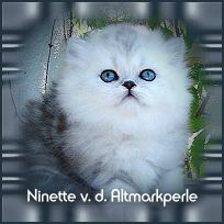 Ninette1.jpg