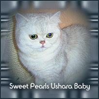 Ushara1.jpg