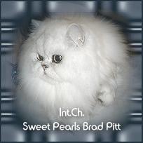 brad_pitt1.jpg